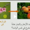 شرح درس لماذا يحتوي النبات على أزهار لمادة العلوم للصف الخامس