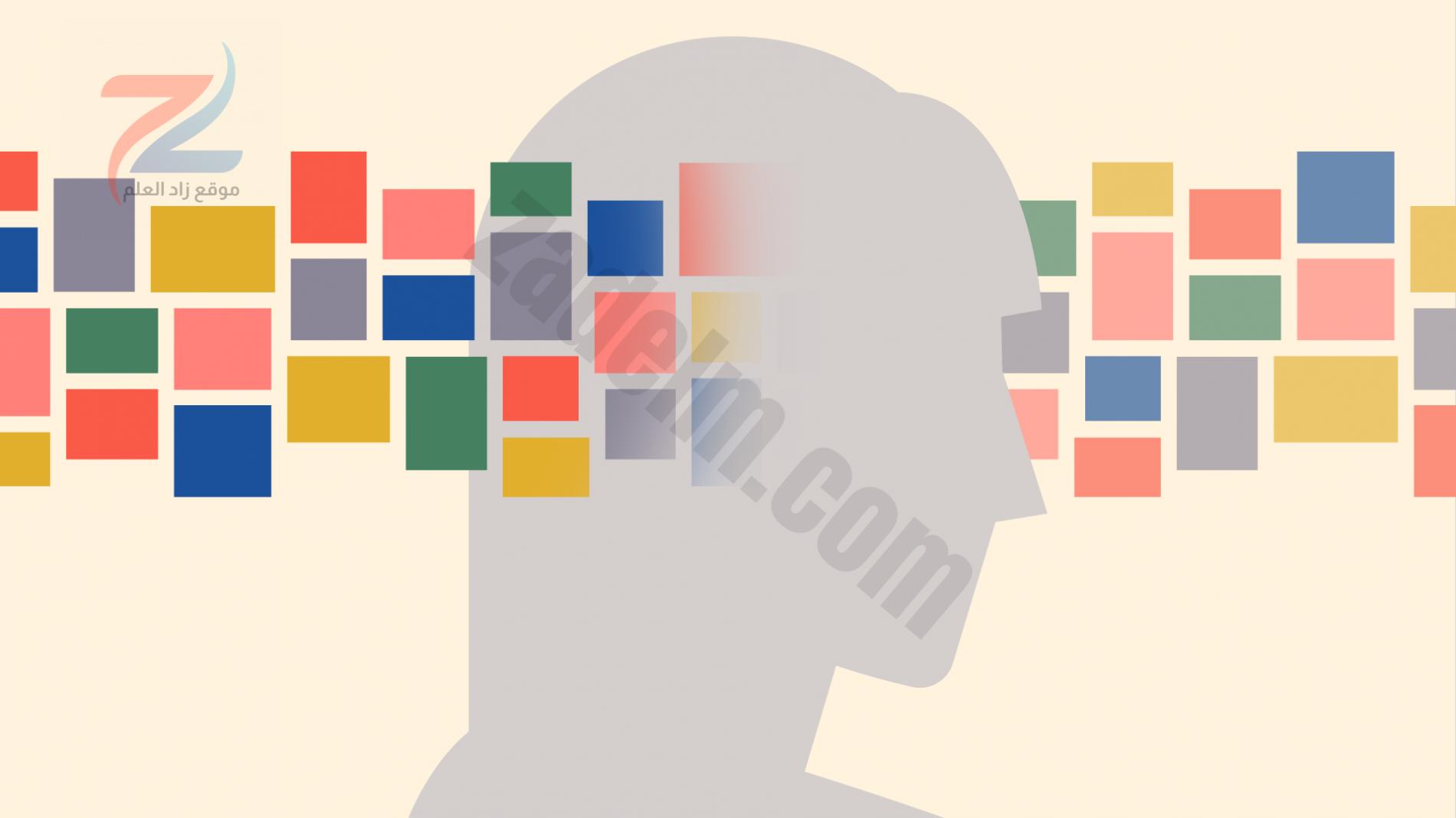 تتدفق المعلومات من خلال الدماغ