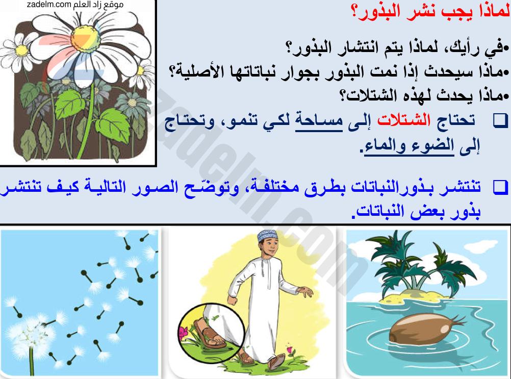 شرح درس كيف تنتشر البذور على أزهار مع حل الأنشطة للخامس