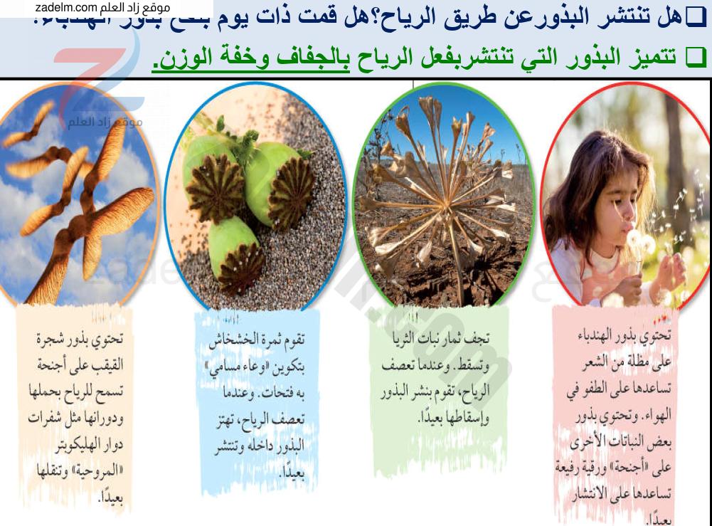 درس طرق أخرى لانتشار البذور مع حل الأنشطة للخامس