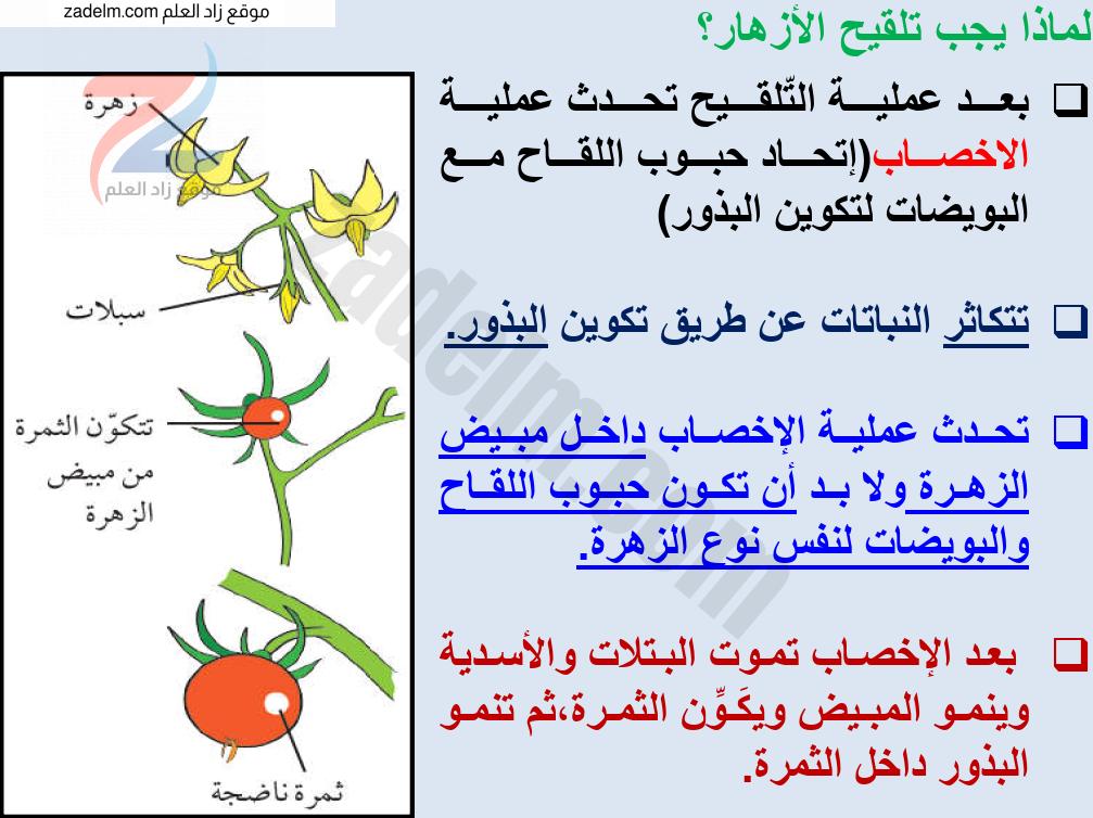 ملخص شرح درس التلقيح مع حل الأنشطة للصف الخامس