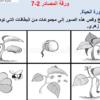 شرح درس دورة حياة النبات مع حل الأنشطة للخامس